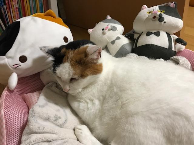 五泉 猫 カフェ