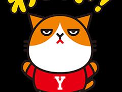 Yモバイル猫